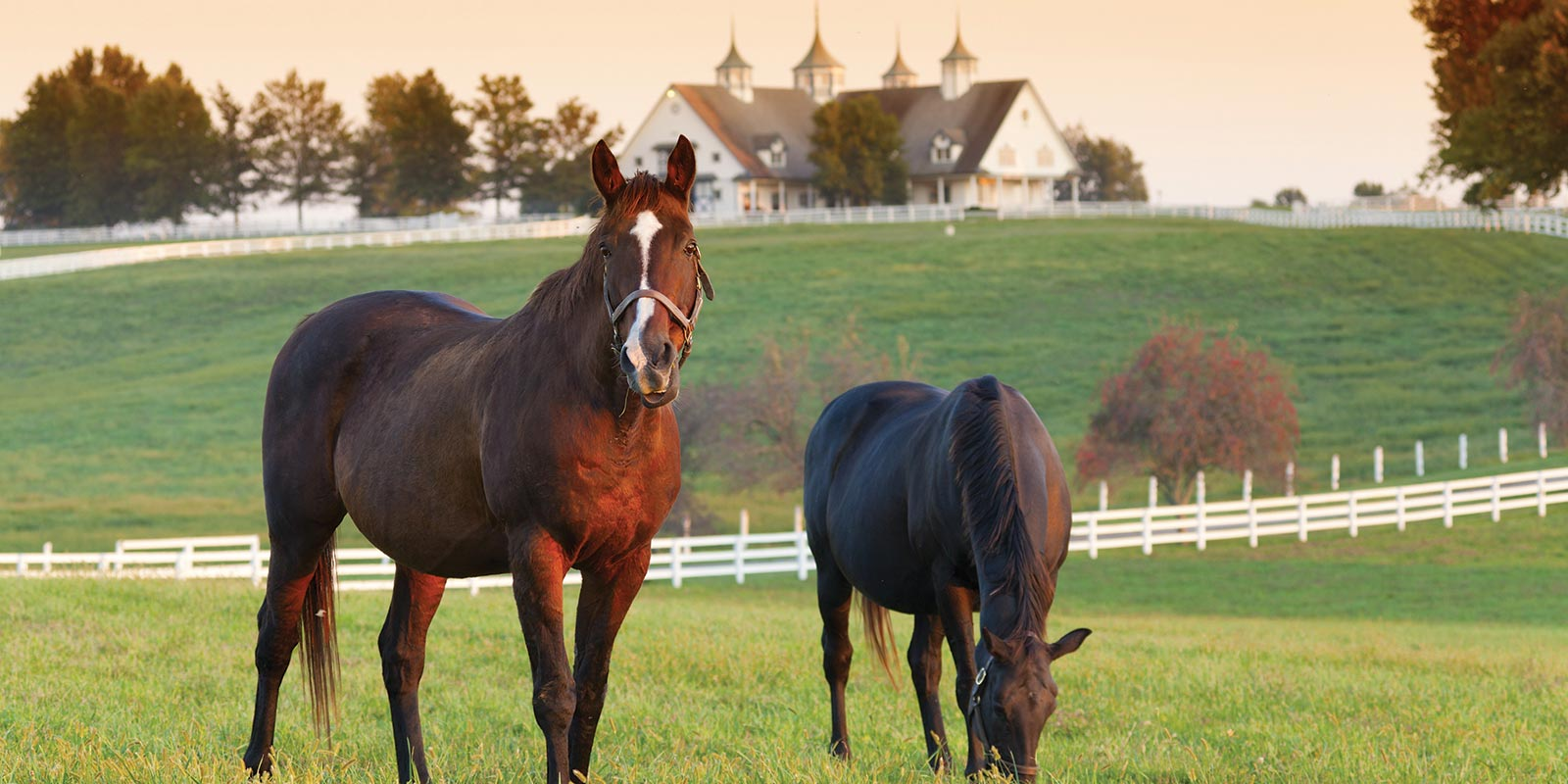 Horse Property For Sale Horse Farms Horse Ranches United Country