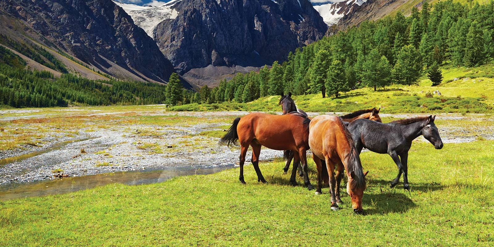 Horse properties for sale horse property real estate for Horse farm