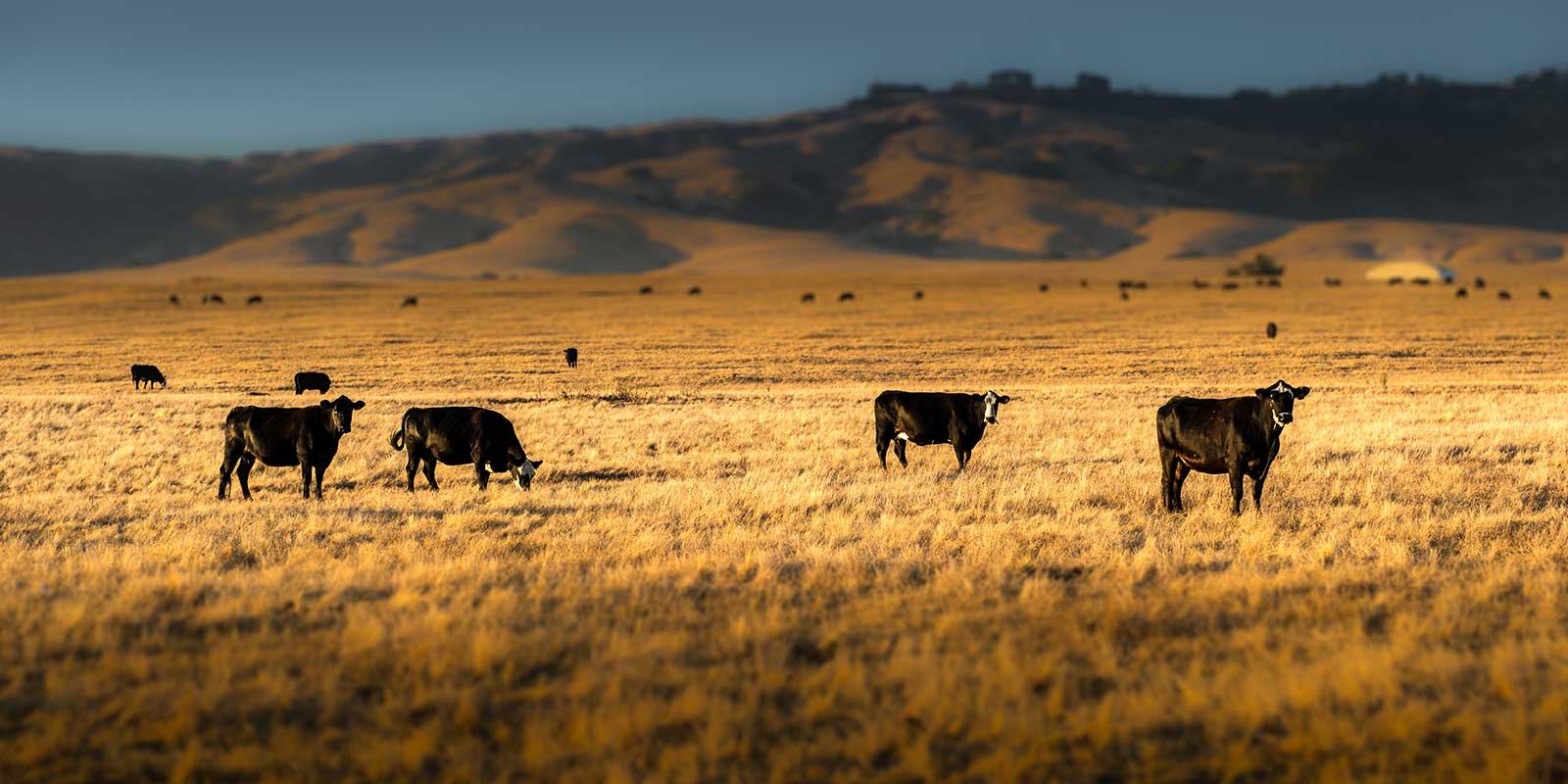 ranches for sale search darren bok auctioneering