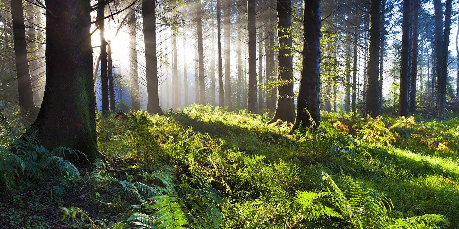 Timberland Property, Forest Land & Timberland For Sale ...