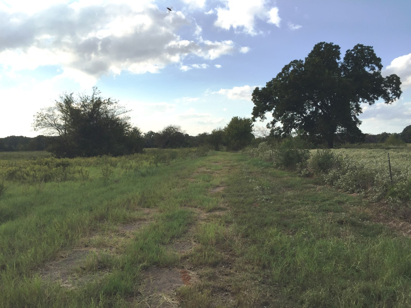 Sold - EAST TEXAS LAND FOR SALE NEAR LAKE FORK IN ALBA TEXAS