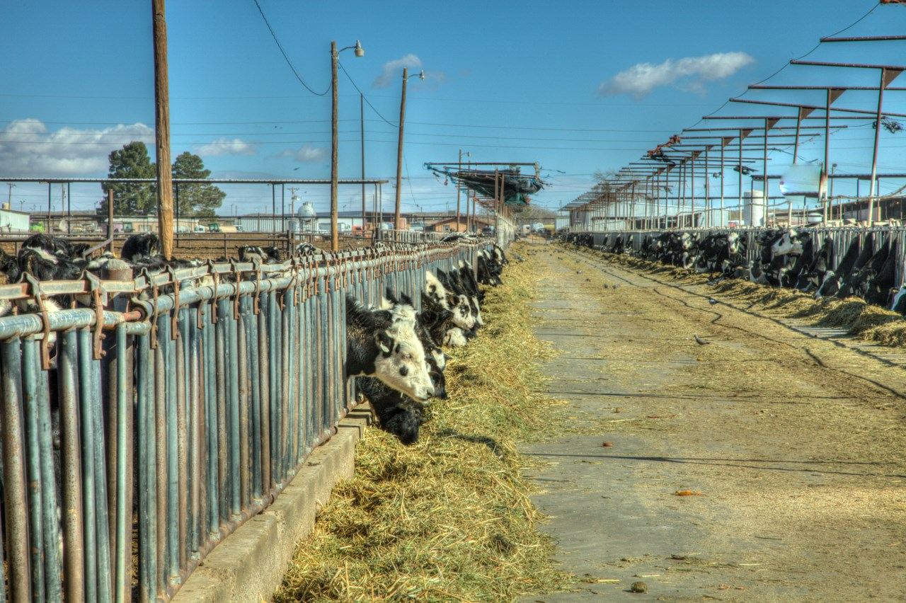 Dairy Feedlot And Row Crop Farm For Sale Vado New Mexico