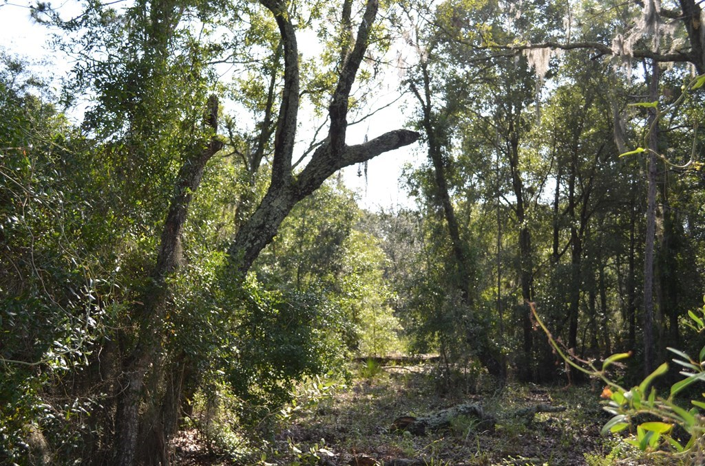 Bell Florida Gilchrist County Land 11 55 Acres