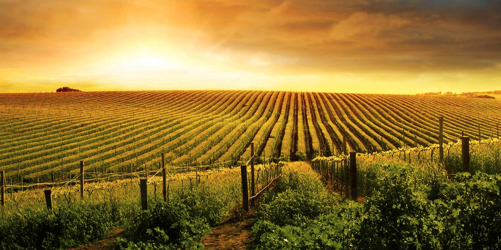 vineyards winery wineries for sale united country